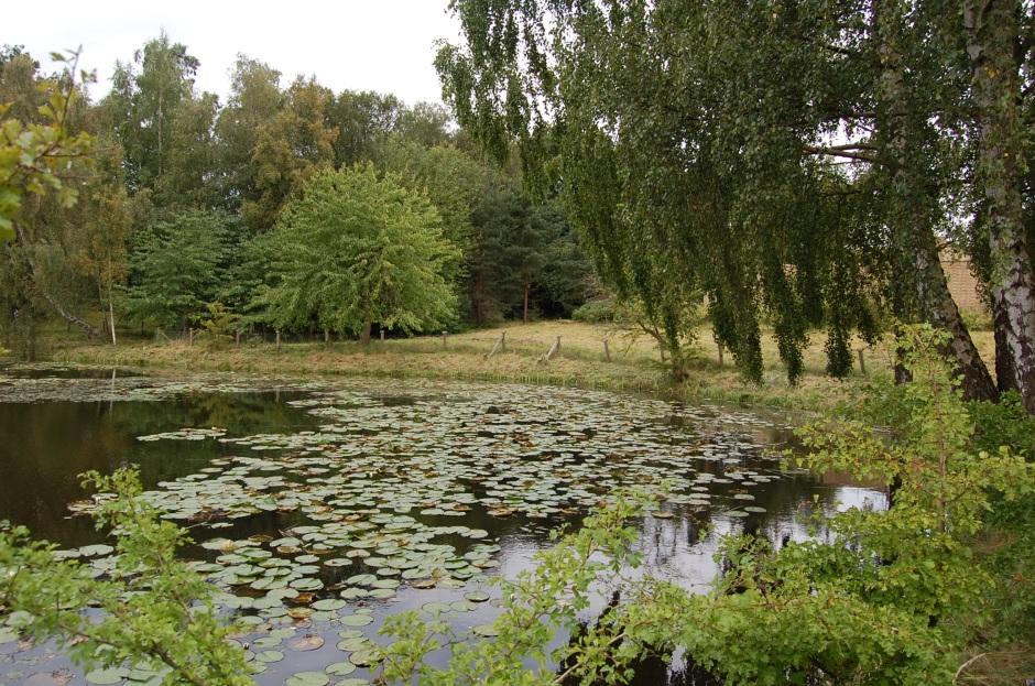 lago9