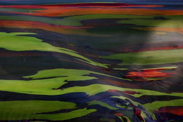 eucalipto-arcoiris-77