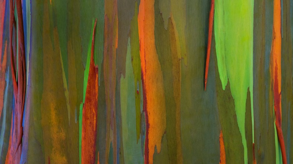 rainbowbark_row9058935012_1366x768